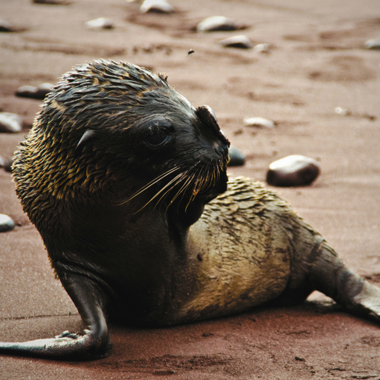 Galapagos Venture