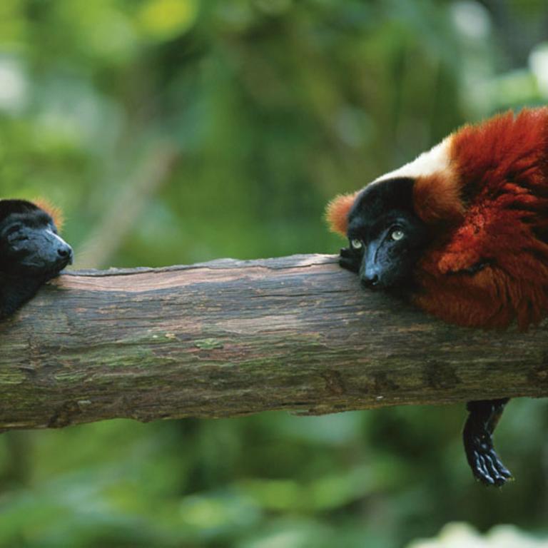 Experience Madagascar
